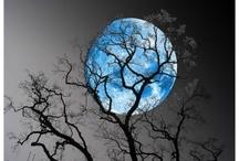 ~ Moonlight Sonata ~ / by Rebecca Doerflinger