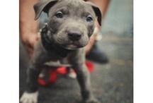 dogs / lieblings...rassen...bilder etc