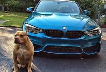 BMW&Pitbull