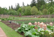 GARDEN - KITCHEN GARDEN / Kitchen garden inspiration.