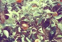 Flores y Frutas de Temporada  / En Sierra Lago Resort encontrará variedad de flores y frutas de acuerdo a la temporada, la naturaleza en su mayor esplendor.