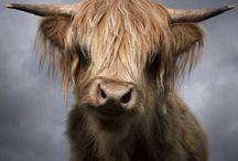 | ANIMAL KINGDOM - LET THE WILD ROAM FREE |