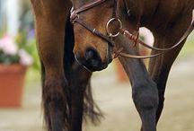 Bridles saddles