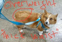 Fat Dog Fiction and Facts
