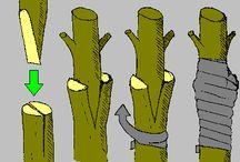 Poding og formering av planter