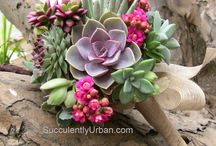 Succulents / by Marcie Ware