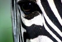 Eye catchy