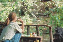 Jane Godall and monkeys