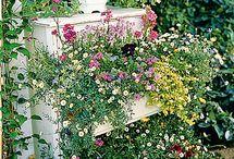 Garden / by Colleen Thompson-Dye