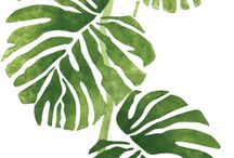 plantes illutrated