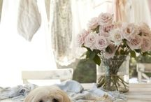 I love dogs with class!! / by Shirl Baker