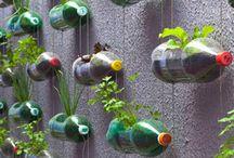 recyclage / plantes