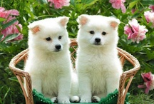 os cachorros