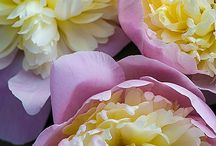 P -- Flowers