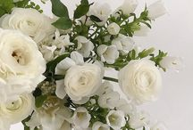 flora | white and greenery