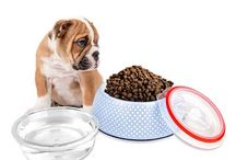 Dog Bowl Stable Pet Feeder
