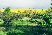 pola, widoki, góry