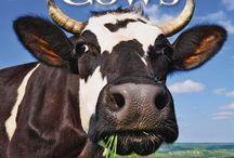2015 cows calendar / by MegaCalendars.com