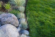 garden ideas#