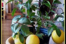 DIY Indoor Gardening