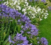 Greenhill / Planting ideas front garden border