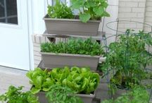 Container Gardens / Herbs, Flowers, Vegetables, Fruits in Containers for Large or Small Spaces.