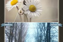 Photoshop Actions / Great Colors for Graphic Designers / Photographers