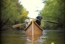 Going to the Dogs! / by Laura Sait