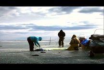 Ловля рыбы сетями зимой. | Подледная рыбалка.