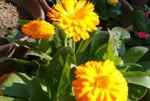 flower in my garden 2015