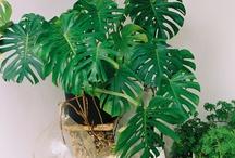 GARDENING: House plants