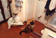 I miei compagni animali / Momenti quotidiani con Frida Ninetta Romeo