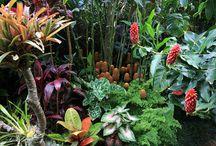 sub tropical garden australia