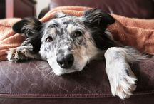 The Daily Doggie Dog