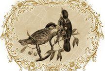 Animals & Birds/Zwierzaki i Ptaki