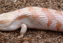 skinks are pointless and I want 50