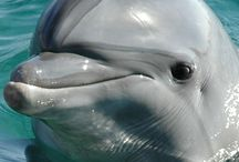 Dolphins / Too cute