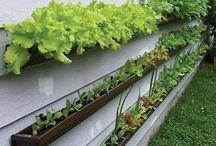 Gardening & Chicken Coop Ideas