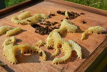Μελισσοκέρι