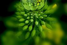 Be Green...