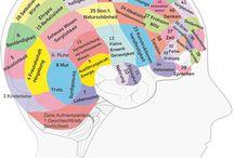 Gehirnaufteilung
