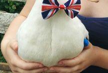 Gänse Hühner Enten