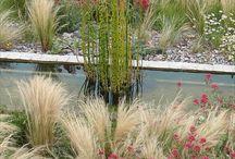 jardins/plantes