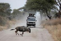 Travel Inspiration: Tanzania