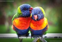 Australian nature / Australian nature photos