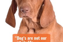 Dog Quotes / #dogquoteslove #dogquotesfunny #dogquotesbestfriend