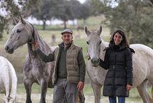 Monte Barrão Stud / Monte Barrão Horses Cavalos do Monte Barrão