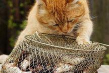 cat love / by laviyenroz