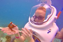 Sea Trek / Take a guided walk on the ocean floor and experience the thrill of exploring a coral reef and all its wonders like a diver without the need for specialized training. http://coralworldvi.com/activities/sea-trek/