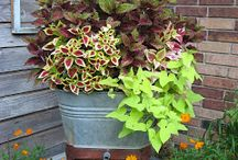 Container Gardening / Patio, porches, rooftops, and in existing gardens. Maximize plant square footage!